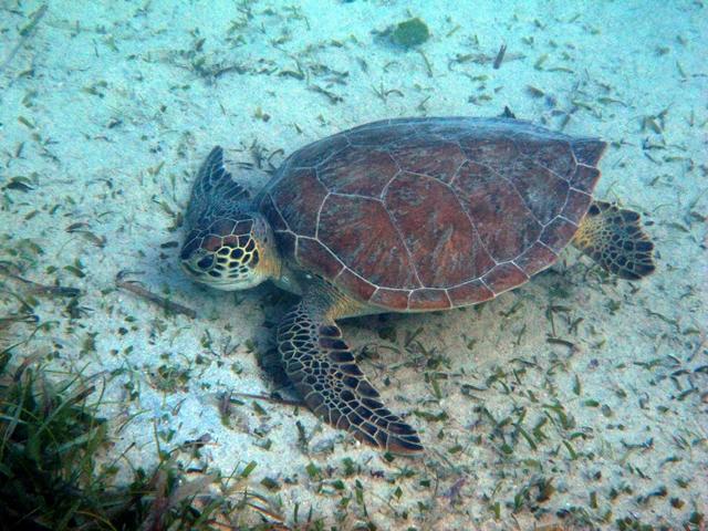 turtleEatingcynla