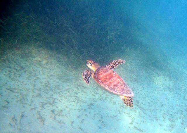 turtle2cynla
